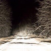 Где - то там он самый....Снежный человек! :: Den Ermakov