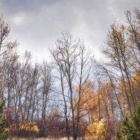 Осенний разноцветный день. :: Лилия *