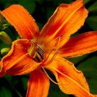 Улитка в цветке :: Александр Цисарь