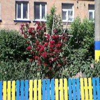 Цветущая Украина :: Миша Любчик