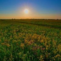 Травы луговые. :: Victor Klyuchev