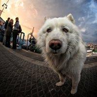 Собачьи мысли... :: Roman Mordashev