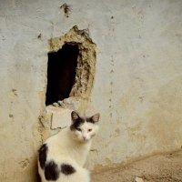 Мой дом-моя крепость.. :: Лариса Красноперова