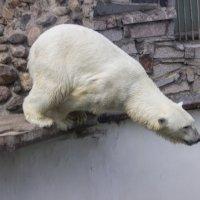 К прыжку готов :: Sergey Lebedev