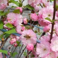 Весна :: Anna Bondarenko