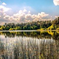 Лесное озеро :: Лёша