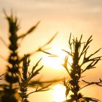 Здравствуй, солнце! :: Ольга Савотина