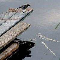Купаться.... не купаться.... :: Валерия  Полещикова
