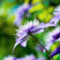 Цветы :: Екатерина Глущенко