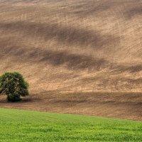 Одинокое дерево, вариант. :: Vladimir Nedayvoda