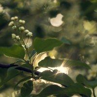 Солнце :: Lenar Akhmetzyanov