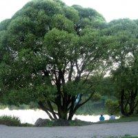 В тени деревьев... :: Елена Семигина