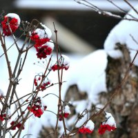 зима :: Светлана Пантелеева