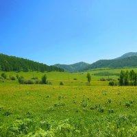 Алтайские просторы :: Николай Танаев
