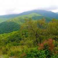 горный Крым :: Андрей Козлов