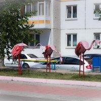 Розовые фламинго :: Юрий Столеру