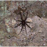 Земляной паук :: Aнна Зарубина