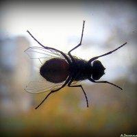Наглый мух :: Андрей Заломленков