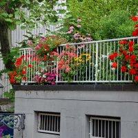 Лето в городе :: Николай Танаев