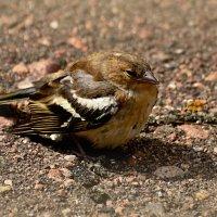 опасный возраст :: linnud