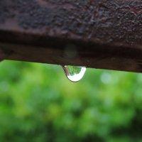 Сирень в капле дождя :: Николай Маров
