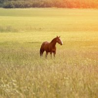 кони :: андрей мазиков