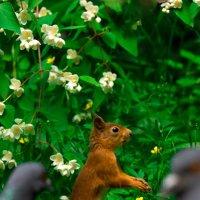 Слышь белка семки есть???? :: Alex Bush