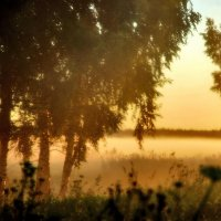 в краю березовых туманов :: sergej-smv