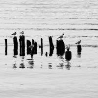 Птички :: Андрей Николаевич Незнанов