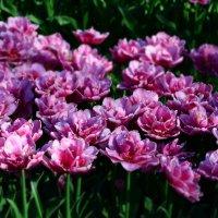 Угадайте, что за цветы? :: Валентина Данилова