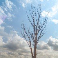 Когда деревья были зелеными, а все нынешние взрослые тоже тогда были зелеными, было детство... :: Юлия Бабитко