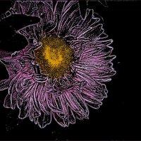 Сиреневые очертания астры :: Нина Корешкова