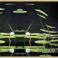 Белая лилия :: Валерий Лазарев