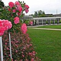 Сад роз в Кобурге :: Galina Dzubina