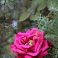 Цветочный хоровод-202. :: Руслан Грицунь
