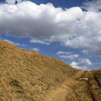 Тургайская весна :: Виталий Дьяченко