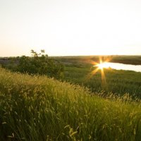 Солнечный луг :: Никита Юдин