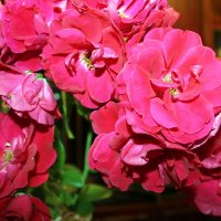 В склянке темного стекла из-под импортного пива роза красная цвела гордо и неторопливо. :: Валентина ツ ღ✿ღ