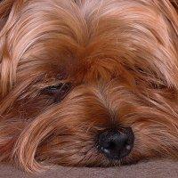 Мой старый добрый пес. :: Вячеслав Минаев