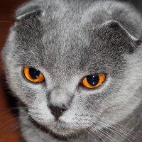 Кошкин взгляд :: Владимир Соловьев