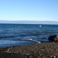 Море и чайки :: cfysx