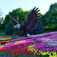 Хранитель тюльпанов :: Валентина Данилова
