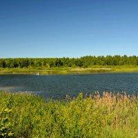 Утренняя рыбалка на озере :: Милешкин Владимир Алексеевич