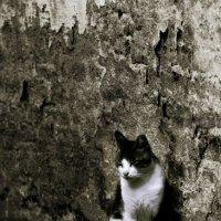 У стены...-из серии кошки очарование моё :: Shmual Hava Retro
