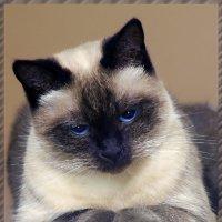 Матильда-из серии кошки очарование моё :: Shmual Hava Retro