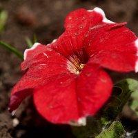 Цветок :: Сергей Черепанов