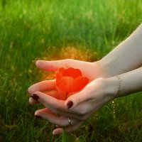 Аленький цветочек :: Оксана Северная