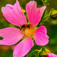 Пчелка :: Anastasia Silver