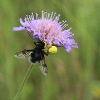 Из жизни насекомых (Муха не Цекатуха) :: Валерий Скобкарёв