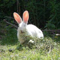 Завтрак кролика :: Ирина Бархатова